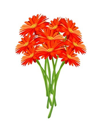 Hand Drawing, Close Up of A Bouquet of Bright and Beautiful Gerbera Daisy Isolated on White Background