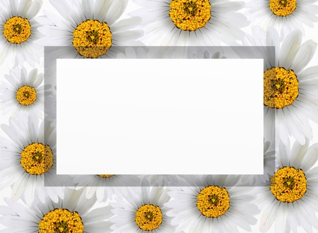A Beautiful Chamomile Flowers or White Daisies Arranged as A Vertical Frame Islated on White Background  photo