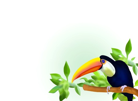 aviary: Hand Drawing of A Borneo Exoctic Great Hornbill Bird on Branch in Rain forest Background Stock Photo