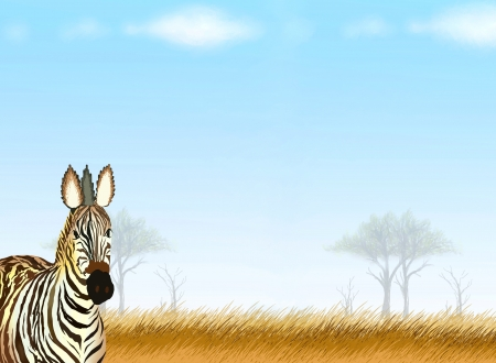 Hand Drawing of A Zebra in The Beautiful Safari Park Background, Take for Postcard or Note Paper photo