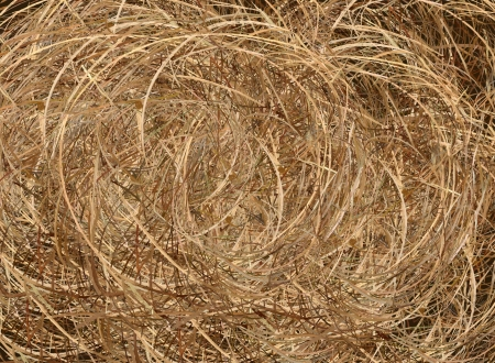 Hand Drawing of A Bale of Straw Pattern Background, Take for Postcard or Note Paper photo