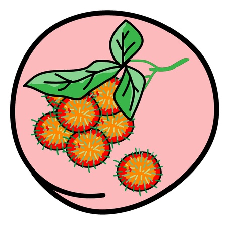 Fresh Fruits, A Cartoon Illustration Bunch of Fresh Red Rambutan in Pink Circle Frame Vector