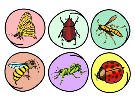 Cartoon Illustration of A Collection of Insect Icon, Ladybug, Butterfly, Grasshopper, Bumblebee, Wasp and Stag Beetle in Circle Frame Stock Vector - 17639409