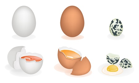 yolk: An Illustration Collection of Three Different Fresh and Natural Egg Yolk Isolated White Backgrounds