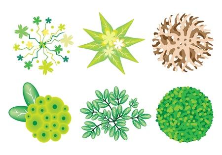 조경 나무 꼭대기 기호 또는 사시 나무와 식물, 정원 장식을 위해 식물, 상록수 및 나무의 다양한 일러스트 집