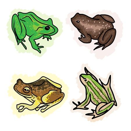 rana venenosa: Una colecci�n de ilustraciones de Anfibios Beautiful, ranas y sapos Isoleted sobre fondo blanco Vectores