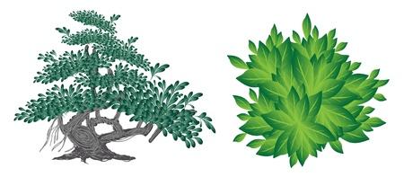 Een illustratie Set van Landscaping Tree Symbolen of isometrische Bomen en Planten, verscheidenheid aan planten, Evergreens en Bomen voor tuin decoratie
