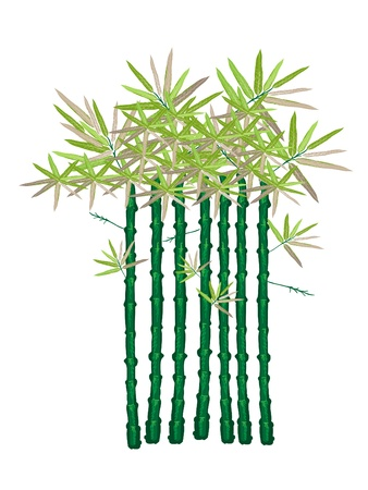 hedge trees: An Illustration Set of Landscaping Tree Symbol or Isometric of Bamboo Plant for Garden Decoration