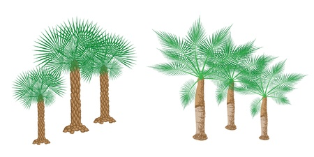 date palm: An Illustration of Landscaping Tree Symbols of Isometric Palm Trees for Garden Decoration