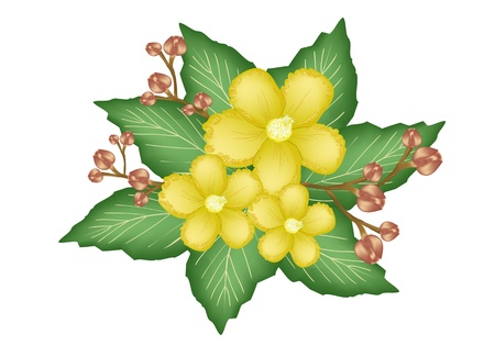 Beautiful Flower, An Illustration Group of Fresh Simpor Flowers or Dillenia Flowers on Green Leaves Isolated on A White Background Vector