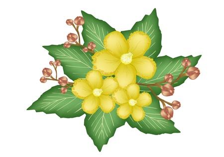 Une Jolie Fleur, Un Groupe Illustration des fleurs fra�ches ou des fleurs Simpor Dillenia sur les feuilles vertes isol� sur un fond blanc Illustration
