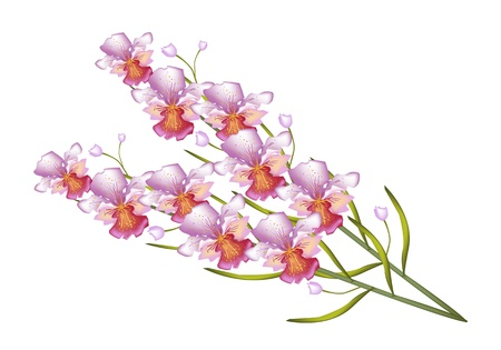 A Symbol of Love and Luxury, An Illustration Beautiful Color of Pink Vanda Orchids Isolated on White Background