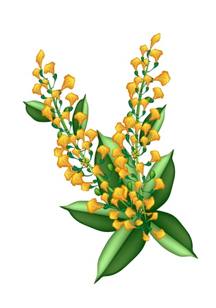 fistula: Beautiful Flower, An Illustration Yellow Color of Padauk Flower or Papilionoideae Flower Isolated on White Background