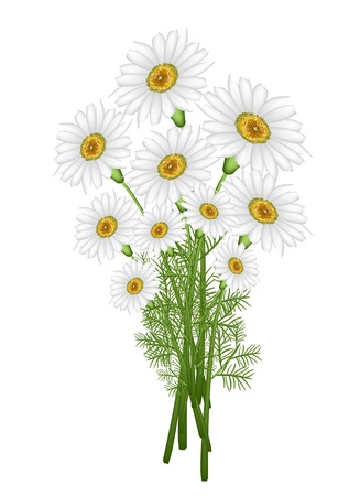 사랑의 상징, 밝고 아름다운 카모마일 꽃 또는 화이트 데이지 데이지 꽃다발 봄의 징후 및 여름 일러스트