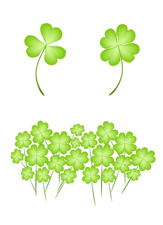cloverleafes: Simboli per fortuna e la fortuna, illustrazione, fresco Four Leaf Clover piante o Shamrock per St Patricks Day Celebration