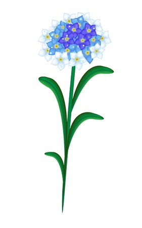 forget: A Symbol of Love, Bright and Beautiful Forget Me Not Flowers Blooming in Spring and Summer