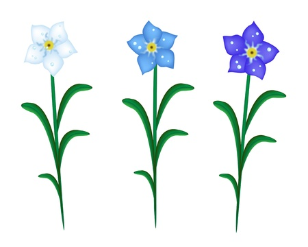 forget: A Symbol of Love, Bright and Beautiful Three Colors of Forget Me Not Flowers Blooming in Spring and Summer