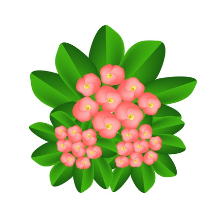houseplant: Beautiful Flower, An Illustration Group of Fresh Crown of Thorn or Euphorbia Milii Flowers on Green Leaves Isolated on A White Background