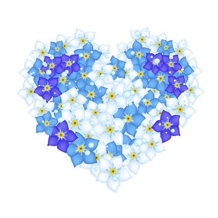forget me not: A Beautiful Blue Heart Shape of Forget Me Not Flowers for Symbol of Love