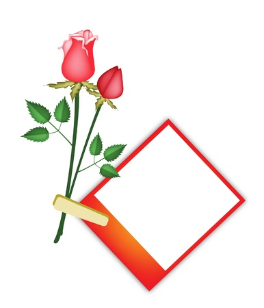 Love Concept, Illustration of Lovely Red Roses Flowers with Blank Instant Photo Prints or Polaroid Frames Isolated on A White Background Stock Vector - 18346979