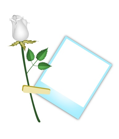 Love Concept, Illustration of A Lovely White Rose with Blue Blank Instant Photo Prints or Polaroid Frames Isolated on A White Background Vector
