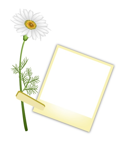 white daisy: Love Concept, Illustration of A Lovely White Daisy or Chamomile Flower with Yellow Blank Instant Photo Prints or Polaroid Frames Isolated on A White Background Illustration