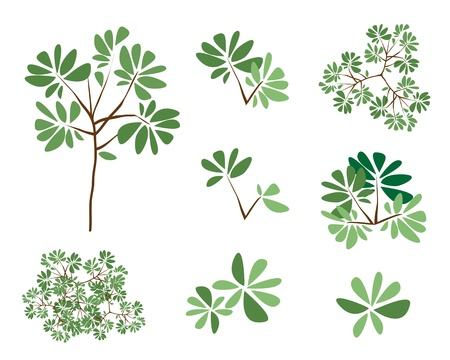 treetop: Terminalia ivorensis, An Illustration Collection of Landscaping Treetop Symbols or Isometric Trees and Plants for Garden Decoration Illustration