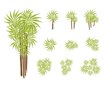 houseplant: Dracaena Plant or Yucca Tree, An Illustration Collection of Beautiful Landscaping Tree Symbols and Isometric Treetops or Plants for Garden Decoration