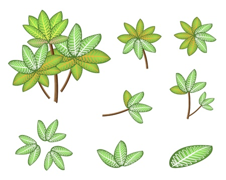 treetop: Ecological Concept, An Illustration Collection of Beautiful Landscaping Tree Symbols and Isometric Treetops or Plants of Dieffenbachia Picta Marianne Plant for Garden Decoration