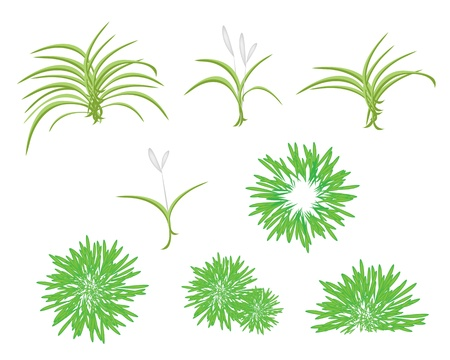 An Illustration Collection of Beautiful Landscaping Tree Symbols and Isometric Treetops of Dracaena Plant or Yucca Tree for Plants for Garden Decoration