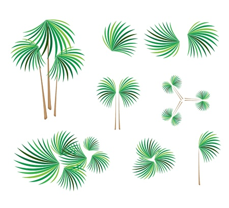 Ecological Concept, An Illustration Tree Symbols or Isometric Green Tree and Plant of Lady Palm Tree or Rhapis Palm for Garden Decoration Vector