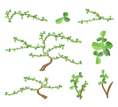 bonsai tree: Bonsai Tree, An Illustration Collection Landscaping Tree Symbols or Isometric Trees and Plantsof Carmona Retusa  Vahl  Masam Plant for Garden Decoration