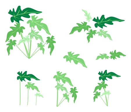 treetop: Ecological Concept, An Illustration Collection of Various Style of Green Leaves of Philodendrum Plant Isolated on White Background Illustration