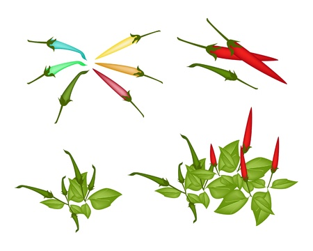 commercial kitchen: An Illustration Collection of Various Style Fresh Red Hot Chili Pepper and Green Hot Chili Pepper With Green Leaves on Plant