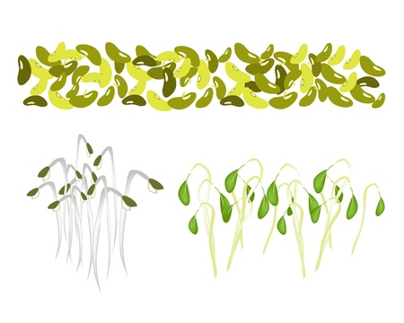 An Illustration Collection of Various Style Fresh Mung Bean and Mung Bean Sprouts With Green Leaves Vector