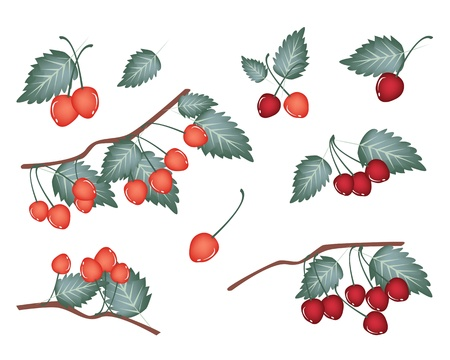 An Illustration Collection of Fresh Red and Sweet Cherries With Stem and Green Leaves Hanging on Tree Branch