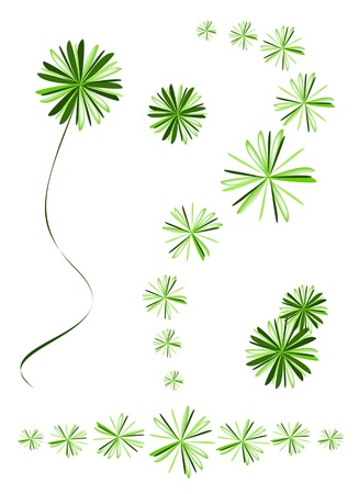 Ecological Concept, An Illustration Beautiful Green Foxtail Fern or Myers Asparagus Densiflorus Leaves Background Vector