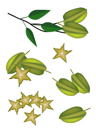 tree cross section: Fresh Fruits, An Illustration Collection of Fresh Ripe Carambolas and Carambolas Cross Section with Green Leaves and Tree Bunch Illustration