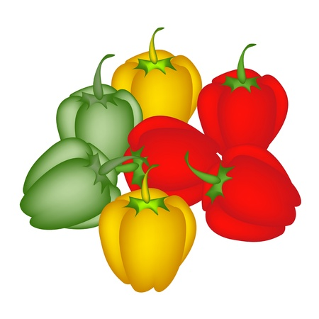 An Illustration Collection, A Group of Various Fresh Bell Peppers in Red, Green and Yellow Colors  Vector