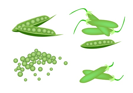 Vegetable, An Illustration Collection of Various Style Fresh Green Peas and Pea Pods Isolated on White Background Vector