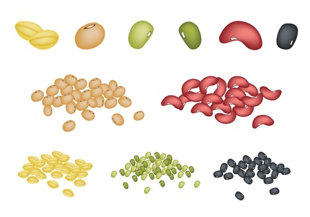 An Illustration Collection of Different Dried Beans, Mung Bean, Kidney Bean, Black Eye Bean, Soy Bean and Yellow Split Peas  イラスト・ベクター素材