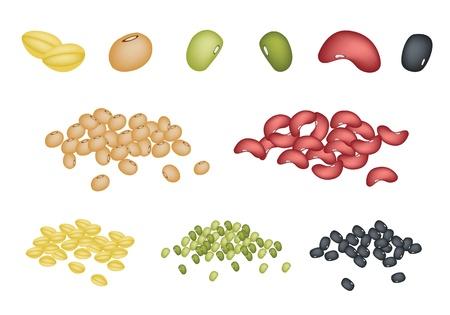 렌즈 콩: 다른 말린 콩의 일러스트 집, 녹두, 강낭콩, 검은 눈 콩, 간장 콩과 노란색 분할 완두콩