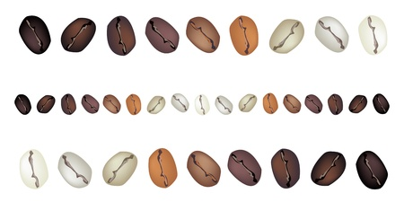 processed grains: Coffee Time, An Illustration Various Colors of Roasted Coffee Beans Isolated on White Background Illustration
