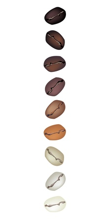american cuisine: Coffee Time, An Illustration Various Kind of Roasted Coffee Beans in A Vertical Row Isolated on White Background
