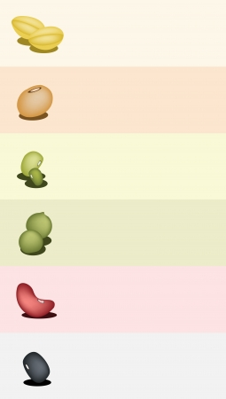 soy bean: A Row of Different Dried Beans, Mung Bean, Kidney Bean, Black Eye Bean, Soy Bean and Yellow Split Peas on Colorful Background