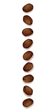 piccolo: Coffee Time, An Illustration Various Type of Roasted Coffee Beans in A Vertical Row Isolated on White Background Illustration