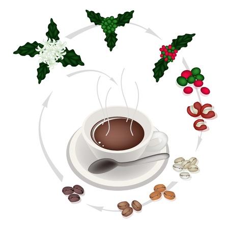 smoke stack: Tempo di caff�, una tazza di caff� con la lavorazione del chicco di caff� tostato da Caff� Fiore in Hot Coffee