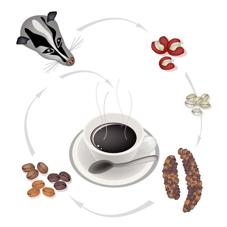 civet cat: A Cup of Kopi Luwak Coffee with Processing of Civet Coffee from Coffee Cherries into Hot Coffee, The Most Expensive Coffee in The World