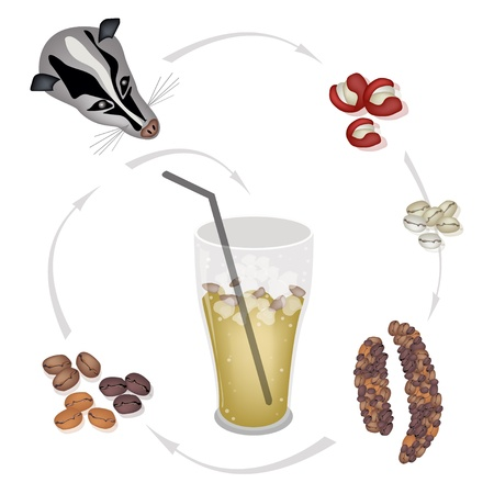 iced: A Glass of Sweet Iced Kopi Luwak Coffee with Processing of Civet Coffee from Coffee Cherries into Iced Coffee, The Most Expensive Coffee in The World Illustration