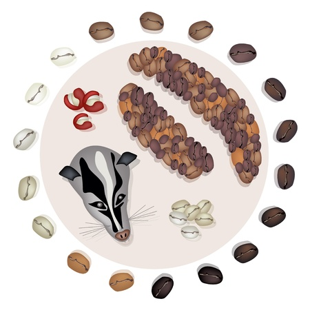 processed grains: Various Kind of Roasted Coffee Bean Around Civet Cat and Civet Coffee Beans, The Most Expensive Coffee in The World